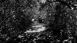 Aprender fotografía blanco y negro2